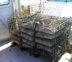 Storage crates for shellfish catch bags