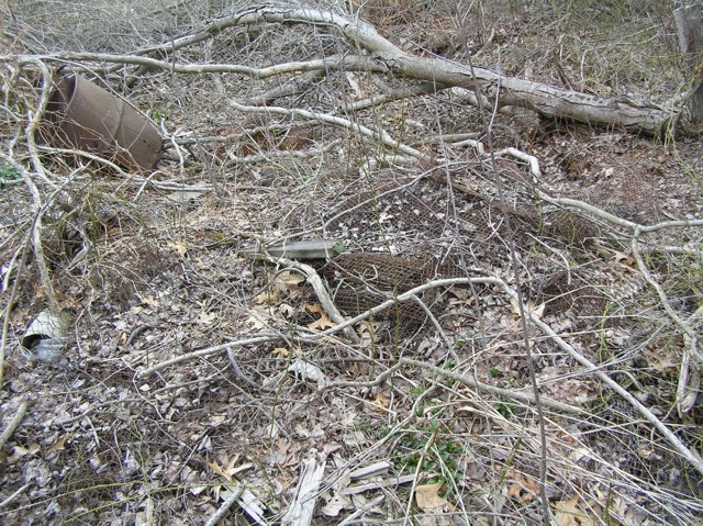image 12 - an old 55 gallon drum can and rolled metal screening on the forest floor