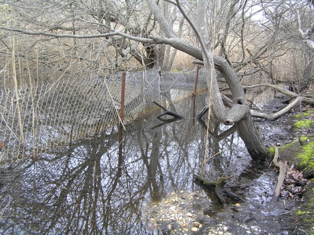image 32 - a small bed of water with downed fenceline in it. trees and reeds are each side of the fence