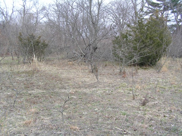 image 35 - a clearing  in the woods with a small bush on the left and a larger bush on the right