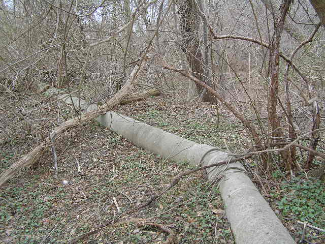 image 43b - a  large metal pipe runs along the forest floor; it has a bend at a 15 degree angle